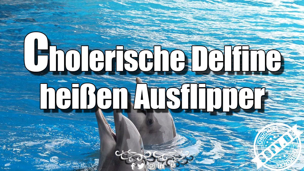 Cholerische Delfine